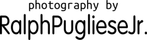 section_logo_12